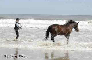 Dusty Perin's Horse Postcard of the Month