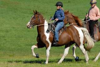 racking horse tennessee walking horse for sale spotted saddle