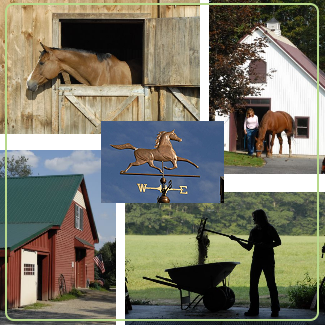 Equine Farm Stock Photography