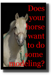 Does your horse want to model?  Contact us.